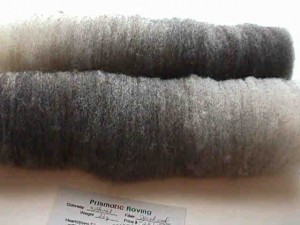 Batts carded from sorted Jacob Sheep wool
