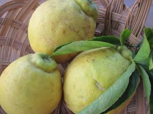 Rough Lemons