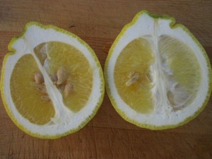 Rough Lemon cut in half