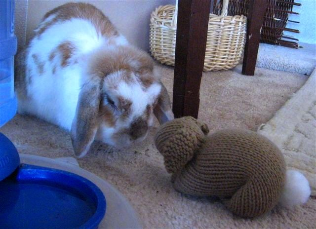 Dusty Bunny and Knitted Bunny Taking Time to Smell the Roses