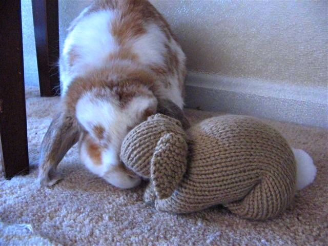 Knitting Patterns For Pet Rabbits : Dusty Bunny and Knitted Bunny Taking Time to Smell the Roses