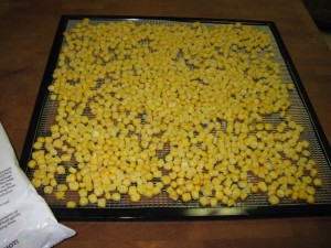 Frozen corn kernels spread on dehydrator tray